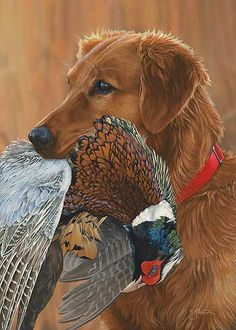 0adf6a6128576 Prize Possession-Golden Retriever by Scot Storm Quail Hunting, Deer Hunting  Tips, Duck