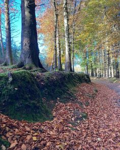 5k from home up in the Dublin Mountains forest walk Dublin, Mountains, Plants, Instagram, Plant, Bergen, Planets