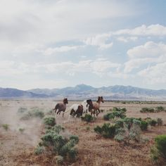 Stunning Photographs across America // by Kevin Russ -- Miss Moss - see wild horses is on my bucket list! Wild At Heart, Nature Sauvage, Into The West, Running Horses, All Nature, Le Far West, To Infinity And Beyond, Wild And Free, Wild Horses