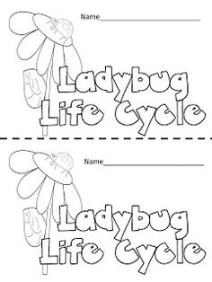 Mini-book about the ladybug life cycle