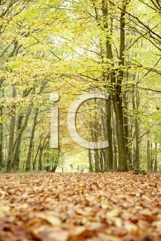 iCLIPART - Royalty Free Photo of Trees in Autumn
