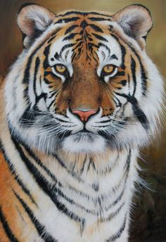 Gallery of Recently Sold Art by Pip McGarry - International Wildlife Artist painting big cats and other wildlife art
