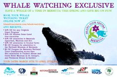 Have a whale of time in Bermuda this Spring and save on fun! Discounted Whale Watching Package in Bermuda!  Total savings per person – up to $110! For more information visit our site www.islandtourcentre.com!