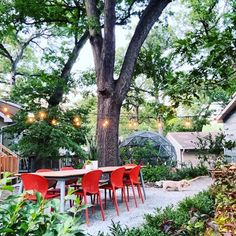 Lisa Nunamaker (@paper.garden.workshop) • Instagram photos and videos Outdoor Dining, Dining Area, Dining Chairs, Stackable Chairs, High Quality Furniture, West Palm, Extra Seating, Garden Furniture