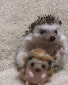 Baby Animals Super Cute, Cute Little Animals, Cute Funny Animals, Baby Animals Pictures, Funny Animal Pictures, Animals And Pets, Hedgehog Pet, Cute Hedgehog, Fluffy Cows