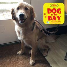 Poppy Great Yarmouth, Dog Friends, Dog Days, Poppy, Dogs, Animals, Animaux, Doggies, Animal