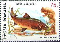 timbre postale - Google-keresés Animal Protection, Postage Stamps, Fish, Cards, Label, Animals, Google, Marine Life, Seals