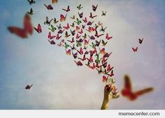 Google Image Result for http://us13.memecdn.com/Jar-of-butterflies-freed_o_68091.jpg