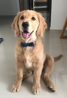 Board, Dogs, Animals, Animales, Animaux, Pet Dogs, Doggies, Animal, Animais