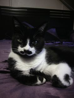 ZOE, the Girl Cat with a Mustache was born on Mothers Day 2011. She was named after one of my Favorite Actress Zoey Claire Deschanel. ZOE brings a lot of smiles to many people by suprising them with Birthday wishes or helping with a Fundraiser. ZOE has her own Facebook Page ZOE, The Girl Cat with a Mustache. Please feel free to like.