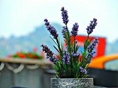 #flowers #flores