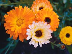 10 Edible, Herbal and Medicinal Flowers - Natural Health - MOTHER EARTH NEWS