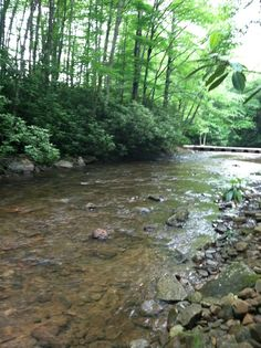 Elk river wv my favorite trout stream and this hole is an for Elk river wv trout fishing