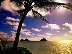 Palm Trees on the Beach at Sunset, Lanikai, U.S.A. Photographic Print by Ann Cecil at Art.com