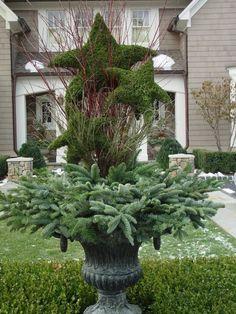 evergreen container during winter months - Deborah Silver