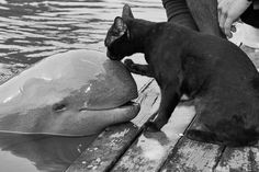 Kitty and dolphin friends!