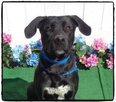 PATRICK-FRIENDS OF SHELTER ANIMALS FOR COBB COUNTY 1060 Al Bishop Drive Marietta, GA 30008 ckersey533@aol.com