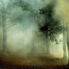 Forest in fog (David Baker, photographer) Natur Wallpaper, Kunst Online, Encaustic Painting, Photo Tree, Belle Photo, Painting Inspiration, Mists, Nature Photography, Photos