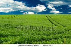 Field of green wheat and a blue sky by Yancho Zapryanov, via ShutterStock