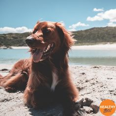 As temperatures rise, do you know how to keep your pet cool? Click the link to read our tips to keep your pet cool this summer and avoid heat-related sickness and costly vet visits. #pets #coolcatsandhotdogs #cats #dogs #HealthyPetsInsurance #heatwave