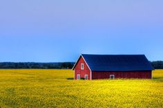 Rapeseed Field at Dusk by diesmali Rapeseed Field, Yellow Fields, Scenery Pictures, Scandinavian Home, Scandinavian Architecture, Red Barns, Perfect World, Thing 1, Dusk