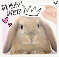 No bunny can snatch this crown. Cuteness reigns supreme!