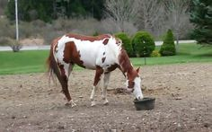 This not-so-little horse was in the mood for a solid play session, however, a standard tennis ball or frisbee just wouldn't cut it.