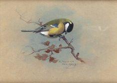 Большая синица, акварель по Archibald Thorburn (1860-1935, United Kingdom)