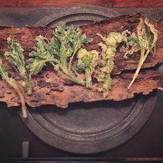 美味すぎて   10品ペロリとたいらげてしまった、| zaborin.com  これは二皿目。  新芽の季節  丁寧に調理された地元の野草たちに感動  #坐忘林#ニセコ#niseko#hokkaido#japan
