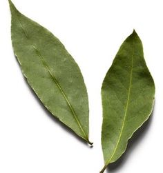 Bay Leaf. Protection, good fortune, success, purification, strength, healing and psychic powers.  G/P/E: Masculine, Sun, Fire.  Magical attributes: Psychic visions and dreams, repels negativity and evil.  Write wishes on the leaves and then burn the leaves to make the wishes come true.  Place under the pillow (or use in dream pillow) to induce prophetic dreams.  Place in the corner of each room in the house to protect all that dwell there...