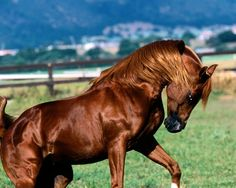 Top 20 Most Beautiful Horses In The World
