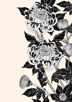 Illustration of Chrysanthemum flower by hand drawing. Floral vintage highly detailed in line art style. vector art, clipart and stock vectors.