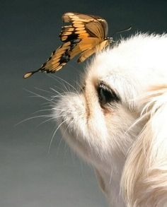 It's hard being so sweet looking that even the butterflies can't keep their distance.