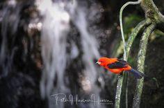 Birdie  by PHOTOPHH.1