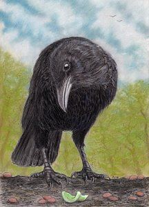 Crow Drawing - The Gift by Philip Harvey