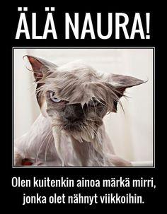 Kuvahaun tulos haulle huumorikuvat Sarcasm, Minions, Cats And Kittens, Memes, Words, Funny, Photography, Animals, Humor