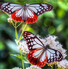 creative collection butterfly wallpaper for home. tips the 25 best butterfly wallpaper ideas on cool Papillon Butterfly, Butterfly Kisses, Butterfly Flowers, Beautiful Bugs, Beautiful Butterflies, Stunningly Beautiful, Absolutely Stunning, Beautiful Flowers, Beautiful Creatures