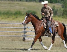 Ride Better With One Rein Riding Horses And Dogs, Show Horses, Centered Riding, Broken Horses, Ranch Riding, Horse Training, Training Tips, Horse Riding Tips, Western Riding
