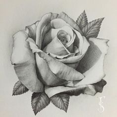 Everything finished with this rose, it's my favorite that I've drawn so far … - diy tattoo project Rose Drawing Tattoo, Tattoo Drawings, Art Drawings, Rose Drawings, Rose Tattoos, Flower Tattoos, Body Art Tattoos, Tatoo Rose, Rose Zeichnung Tattoo