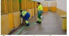 Sacrificio cero en las perreras de Mallorca