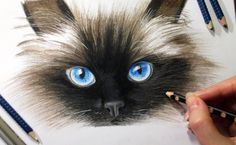 Drawing Cat's face in colored pencil ► Jasmina Susak How to draw a cat c...