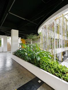 Gallery of Golkar Jakarta Office / Delution Architect - 4 Green Facade, Tropical Landscaping, Plant Design, Jakarta, Indoor Plants, Landscape Design, Interior Design, Architecture, Gallery