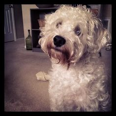 schnoodle...