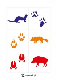 gra Science For Kids, Science And Nature, Art For Kids, Animal Footprints, Montessori Practical Life, Learning Cards, Animal Tracks, Preschool Education, Forest School