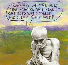 Michael Lipsey questions