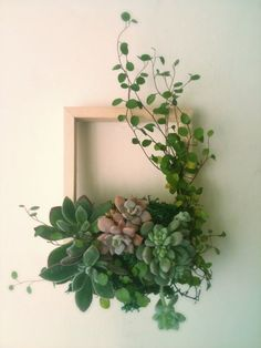 20 Gorgeous Succulent Wall Art To Display Houseplants - For the Home - Tipos de Jardim Types Of Succulents, Succulents In Containers, Cacti And Succulents, Planting Succulents, Planting Flowers, Propagate Succulents, Succulent Frame, Succulent Wall Art, Succulent Arrangements