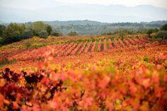 I colori dell'autunno a Castel Campagnano
