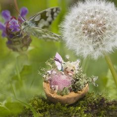 Sweet Pea  A darling little baby fairy, happily gurgling her little walnut shell  bed while mummy flies off to collect nectar and berries . . .