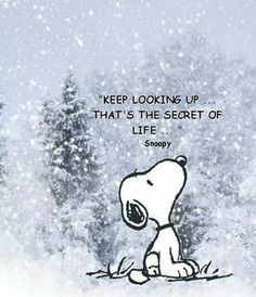 Snoopy says to keep looking up. Snoopy was very wise! Snoopy Frases, Snoopy Quotes, Peanuts Quotes, Cartoon Quotes, Great Quotes, Me Quotes, Motivational Quotes, Inspirational Quotes, Look Up Quotes