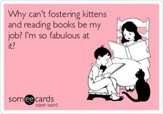 Why cant fostering kittens and reading books be my job? I'm so fabulous at it!